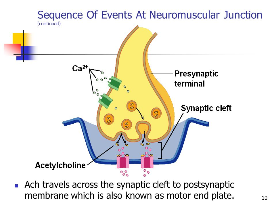 Neuromuscular Junction Ppt Video Online Download