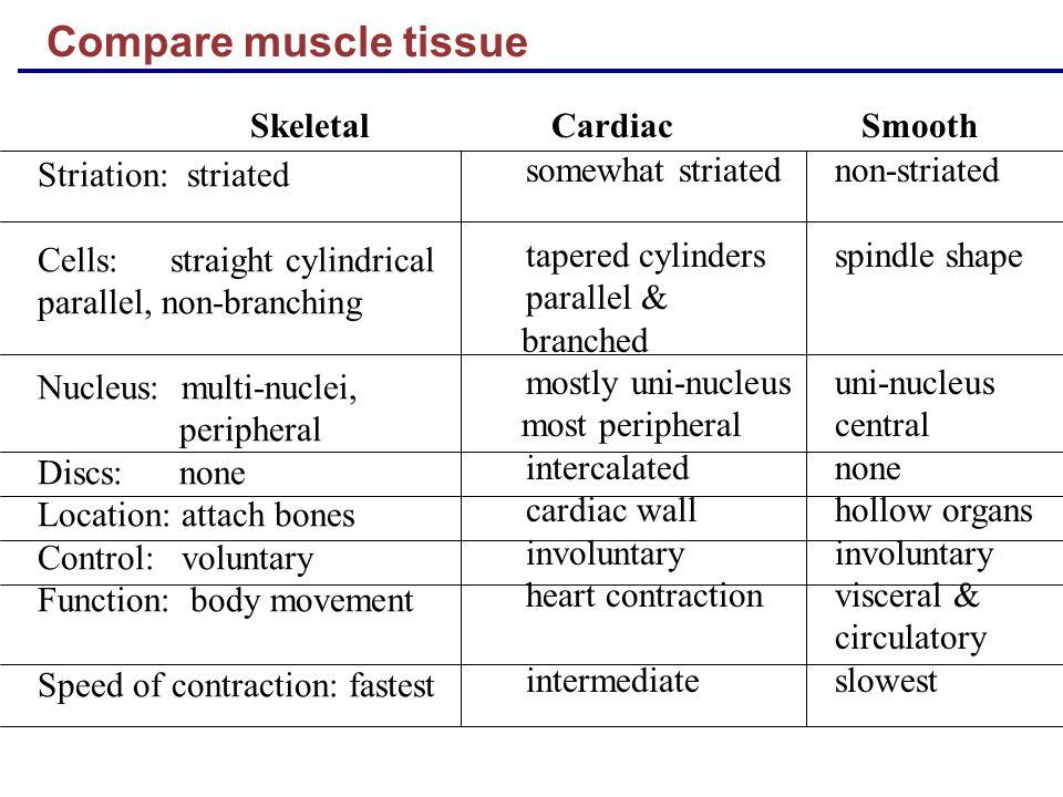 similarities of skeletal and cardiac muscle