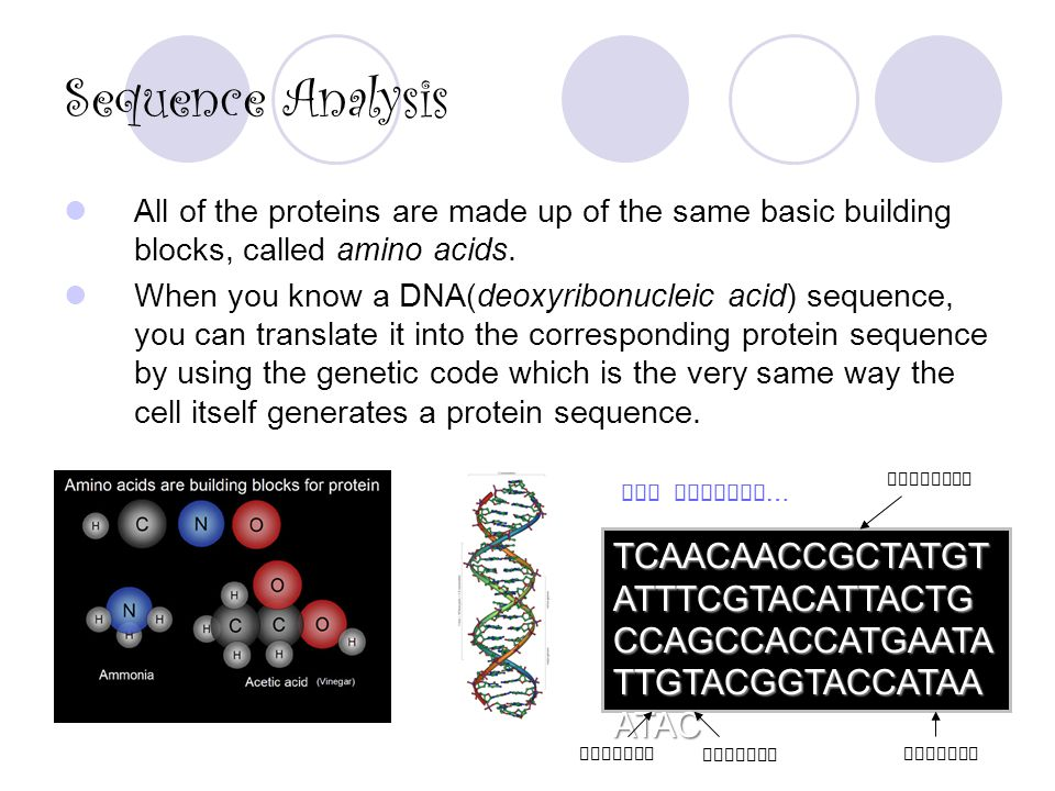 Sequence Analysis All of the proteins are made up of the same basic building blocks, called amino acids.