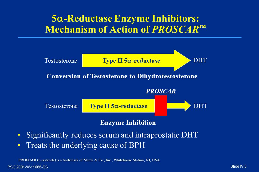 5 Ef 81 A1 Reductase Enzyme Inhibitors Mechanism Of Action Of Proscar