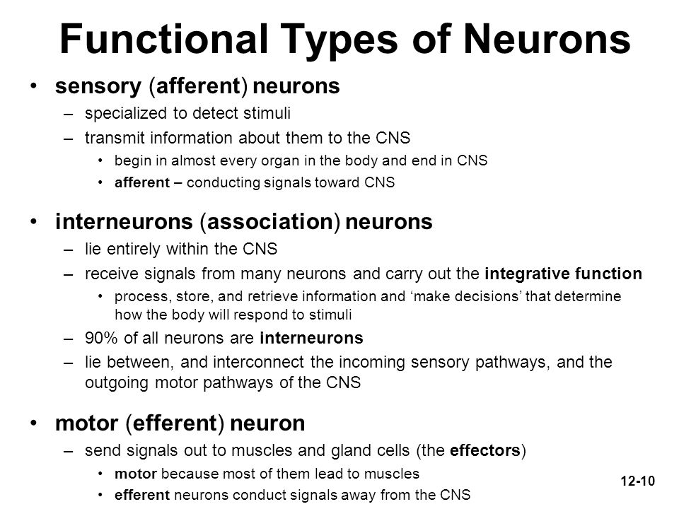 Functional Types of Neurons