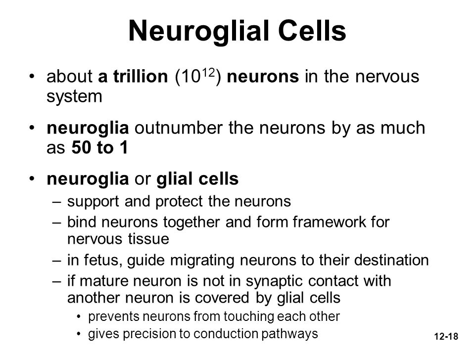 Neuroglial Cells about a trillion (1012) neurons in the nervous system