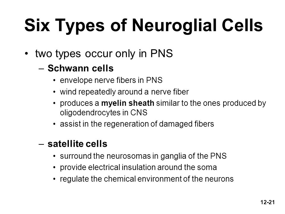 Six Types of Neuroglial Cells