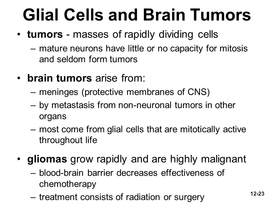 Glial Cells and Brain Tumors