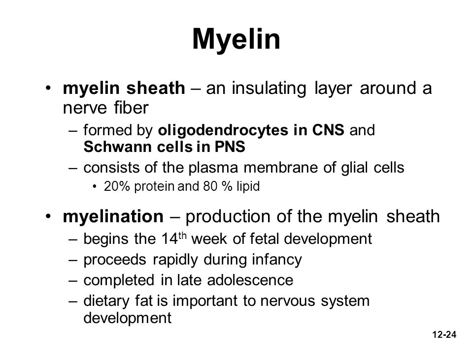 Myelin myelin sheath – an insulating layer around a nerve fiber