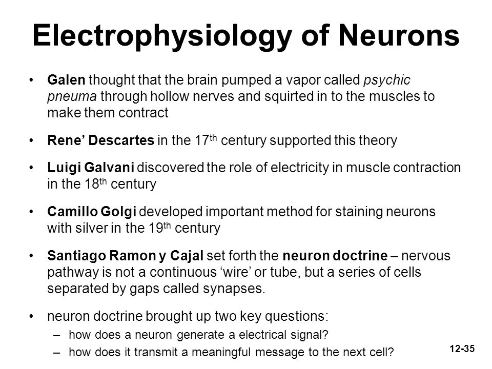 Electrophysiology of Neurons