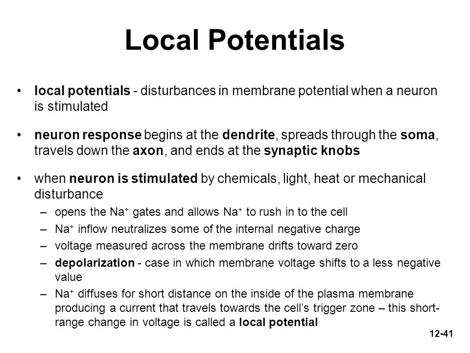 Local Potentials local potentials - disturbances in membrane potential when a neuron is stimulated.