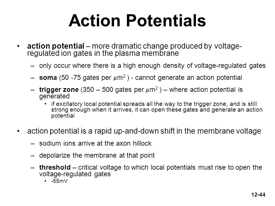 Action Potentials action potential – more dramatic change produced by voltage-regulated ion gates in the plasma membrane.