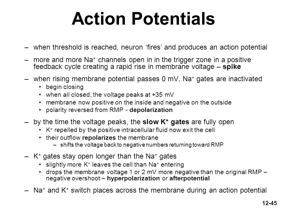 Action Potentials when threshold is reached, neuron 'fires' and produces an action potential.