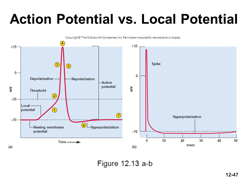 Action Potential vs. Local Potential