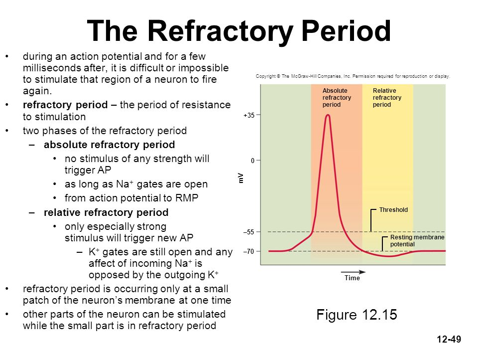 The Refractory Period Figure 12.15