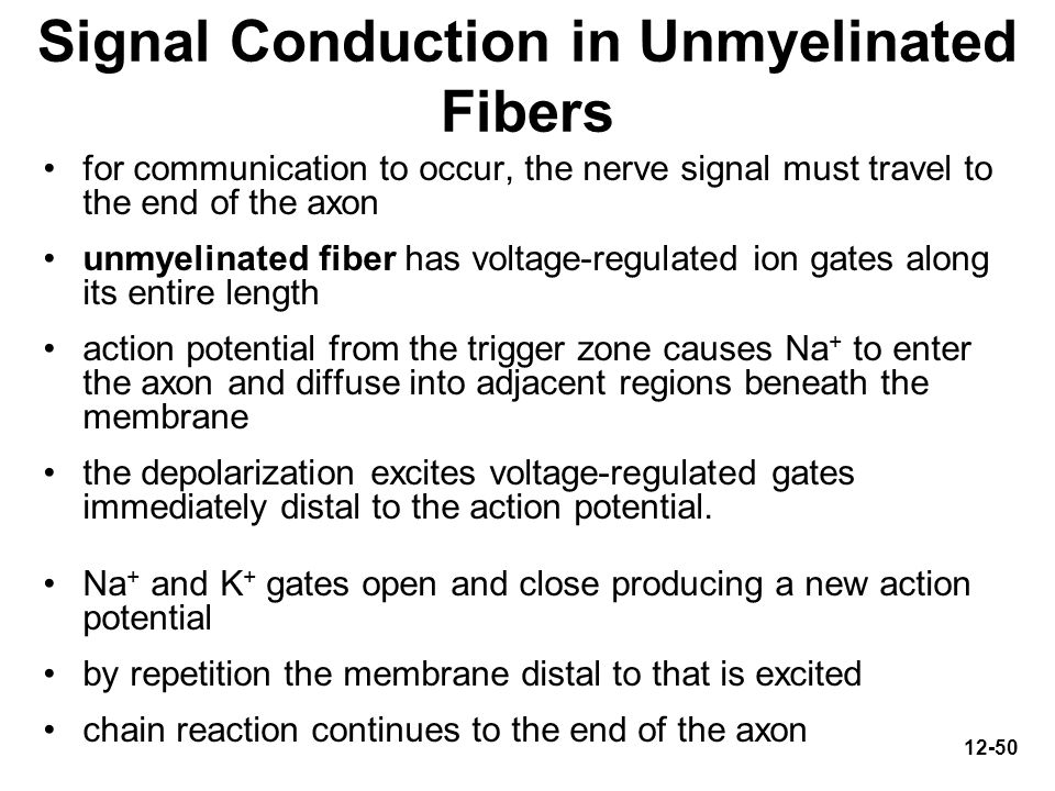 Signal Conduction in Unmyelinated Fibers