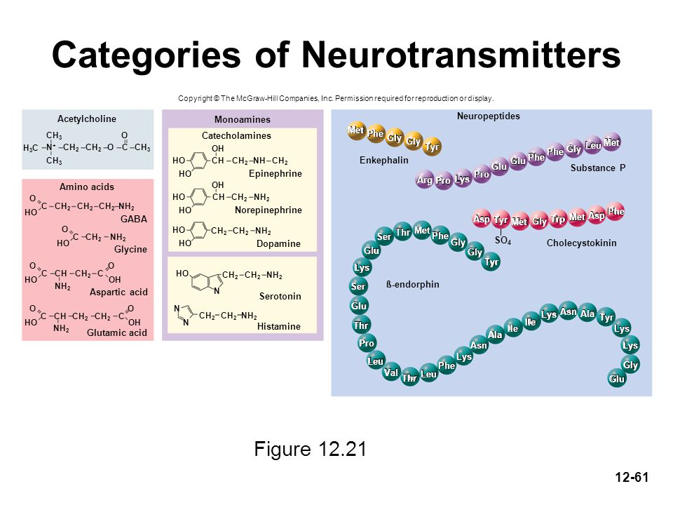 Categories of Neurotransmitters