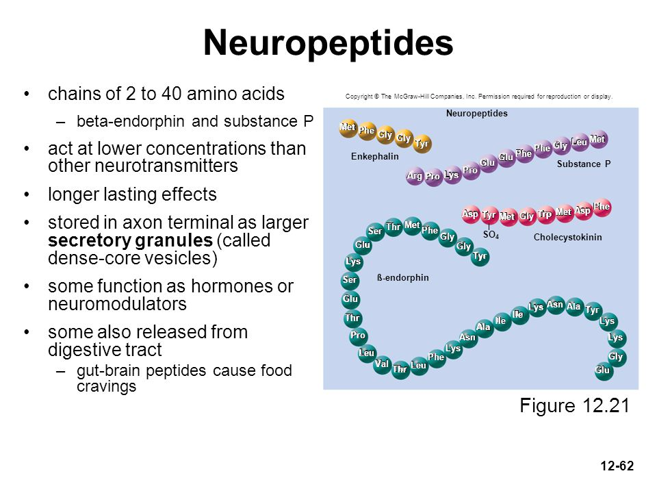Neuropeptides Figure 12.21 chains of 2 to 40 amino acids