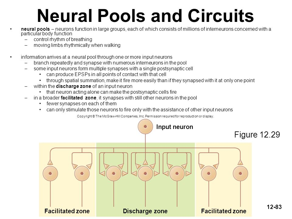 Neural Pools and Circuits