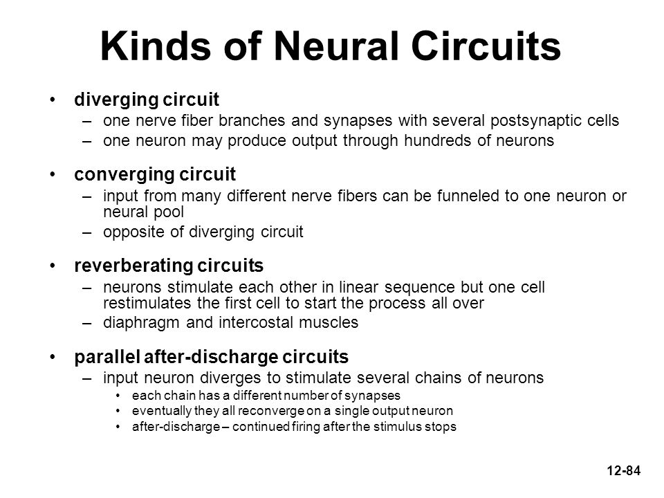 Kinds of Neural Circuits