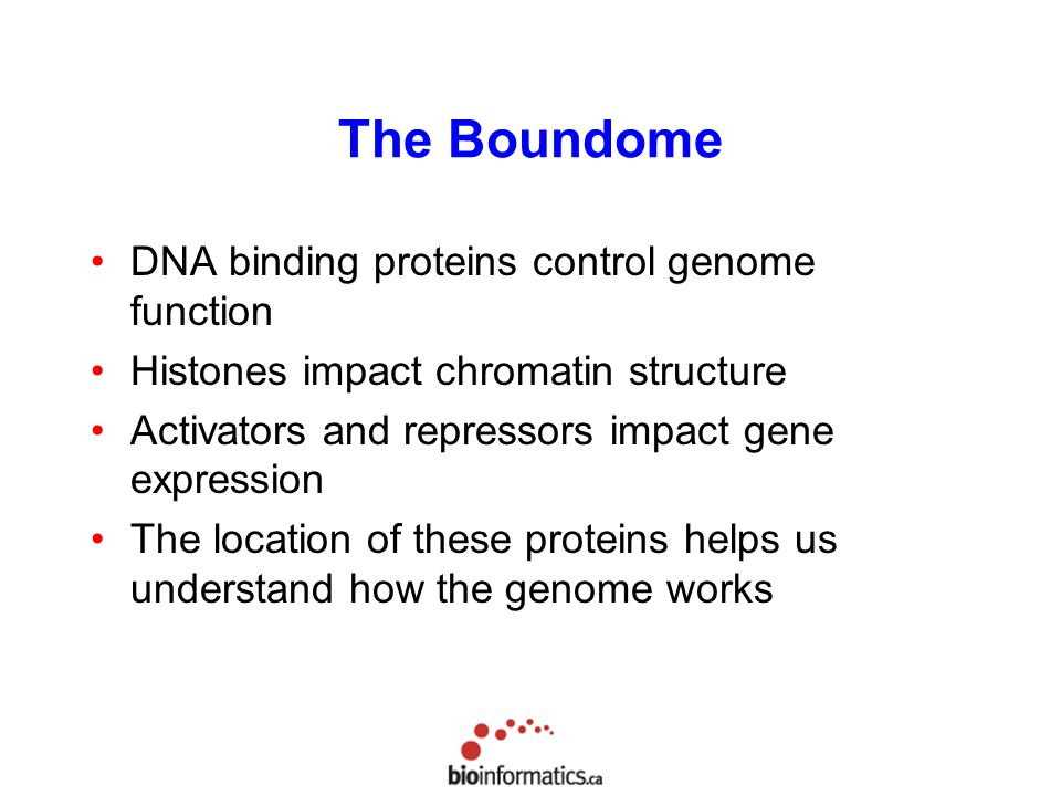 The Boundome DNA binding proteins control genome function