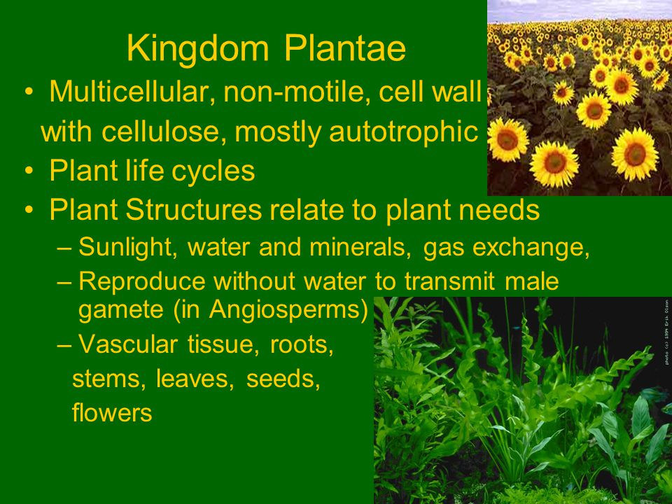 Plants Anatomy Growth And Function Ppt Video Online Download