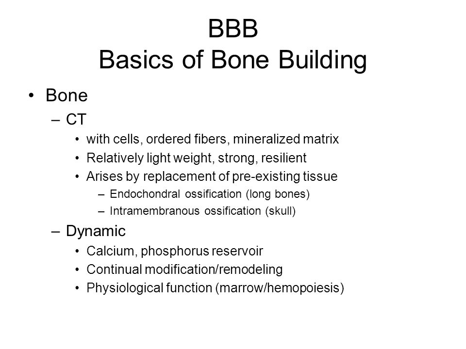 BBB Basics of Bone Building