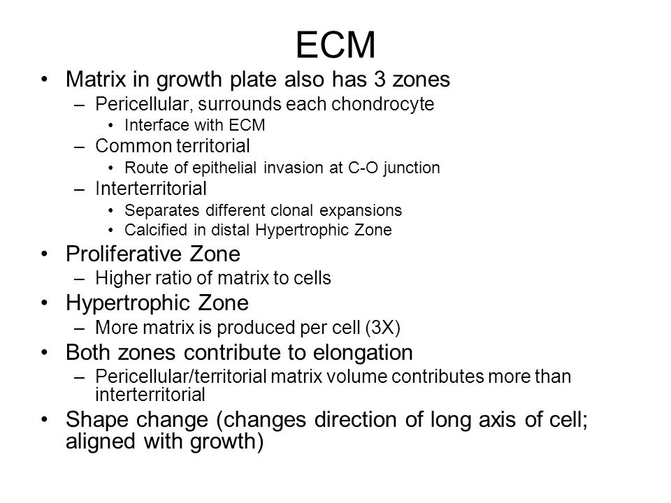 ECM Matrix in growth plate also has 3 zones Proliferative Zone