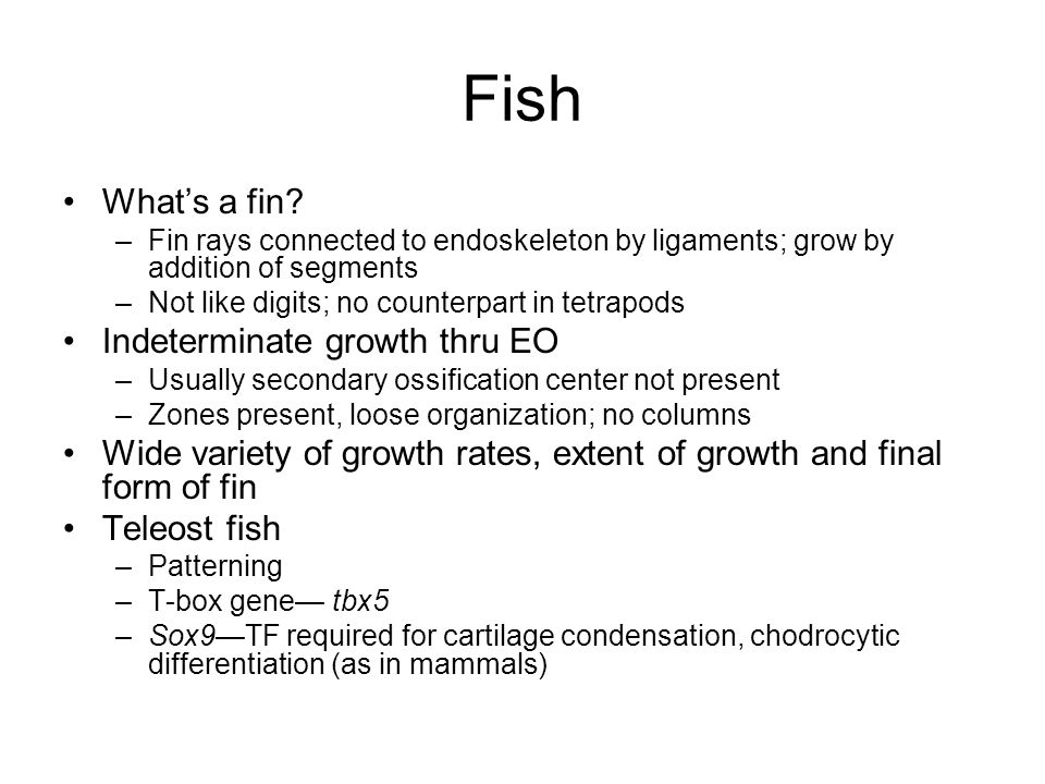 Fish What's a fin Indeterminate growth thru EO