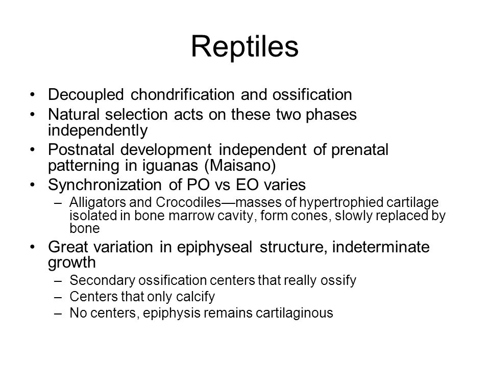 Reptiles Decoupled chondrification and ossification