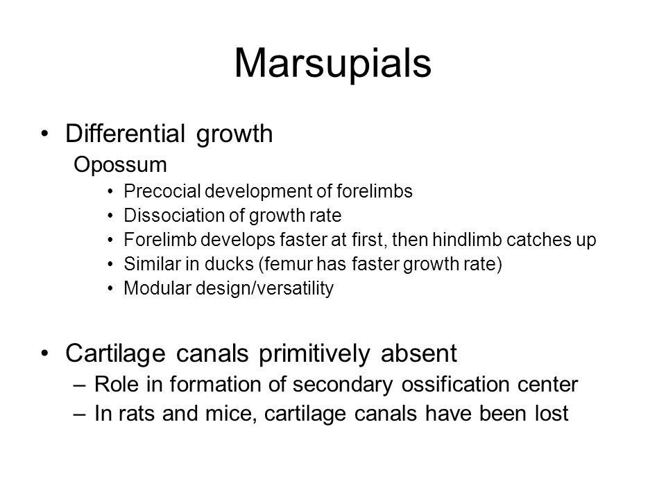 Marsupials Differential growth Cartilage canals primitively absent