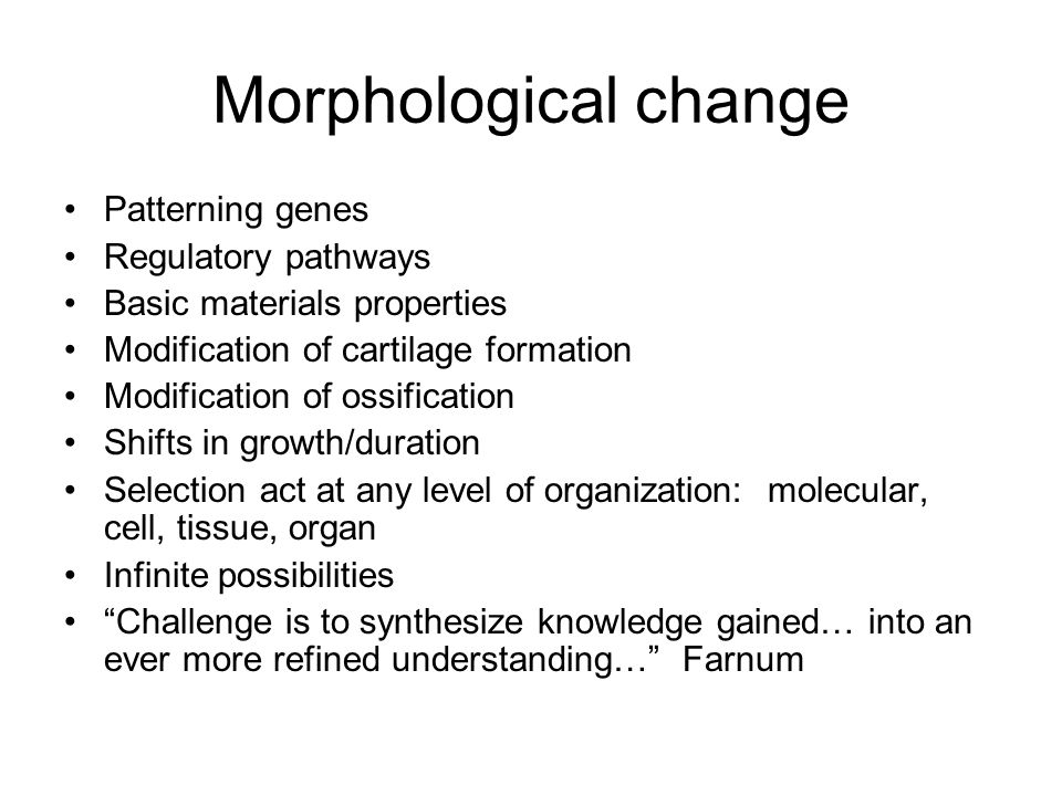 Morphological change Patterning genes Regulatory pathways
