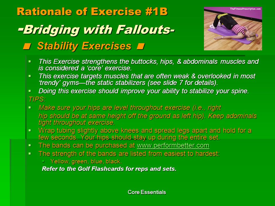 Rationale of Exercise #1B -Bridging with Fallouts- < Stability Exercises <