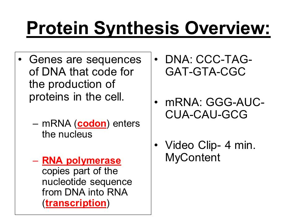 Georgia performance standards ppt download 12 protein synthesis overview ccuart Choice Image