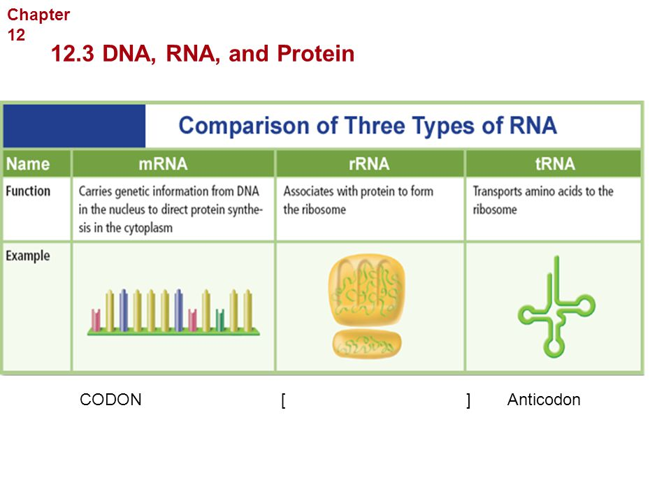 Georgia Performance Standards Ppt Download. 123 Dna Rna And Protein Chapter 12 Molecular Geics. Worksheet. Section 12 3 Rna And Protein Synthesis Worksheet Answers At Mspartners.co