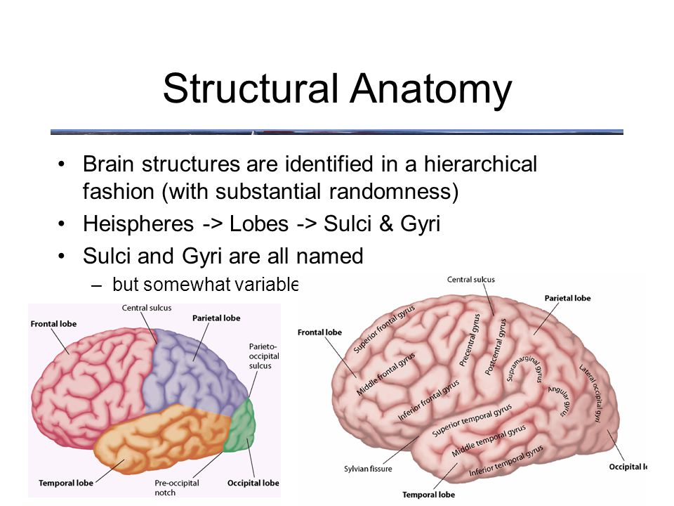 Anatomy What is the difference between Structural Anatomy and ...
