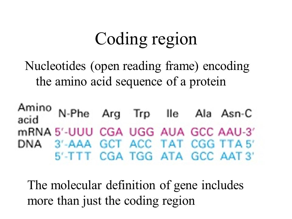 Genome Organization & Protein Synthesis and Processing in Plants ...