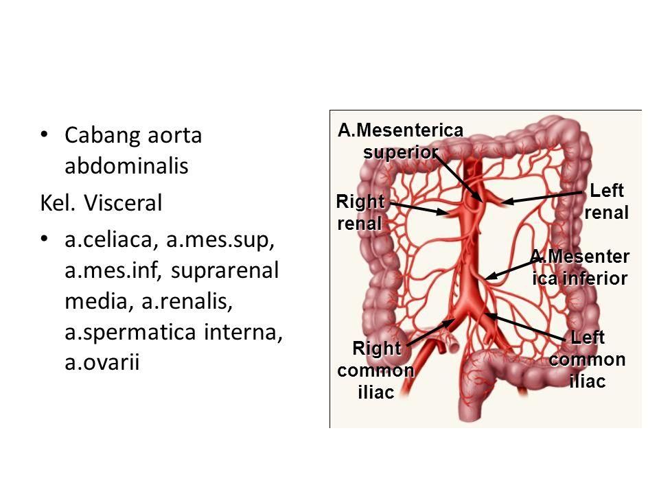 Sistem Kardiovaskuler - ppt video online download