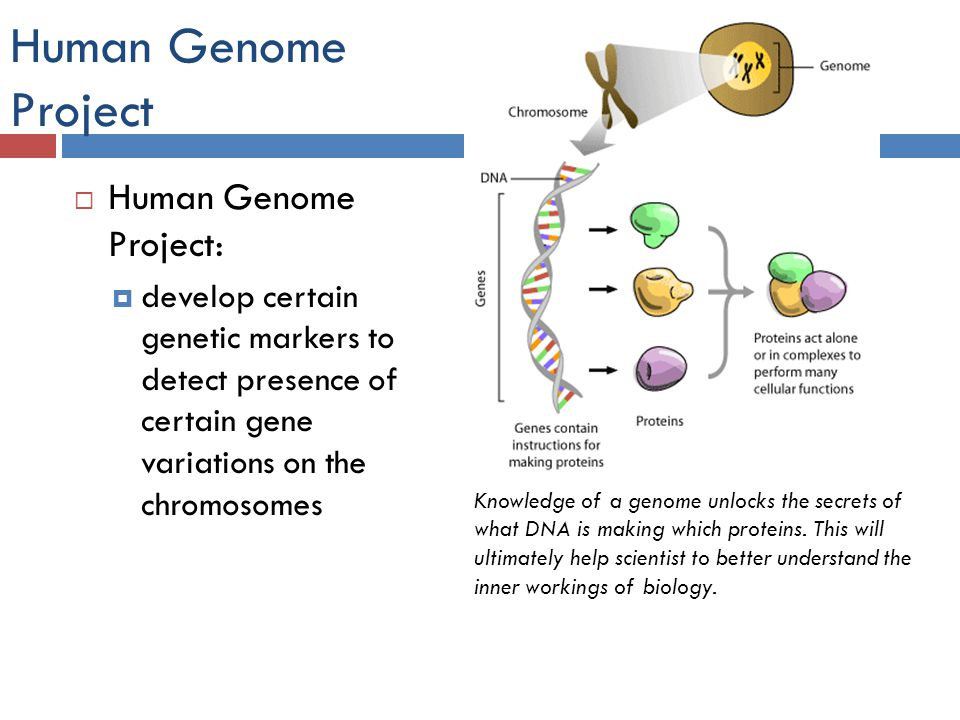 an analysis of the biological revolution revealed by the human genome project Page 1 of 15 els els els a5177 human genome project, personalised medicine and future health care niccolò tempini exeter centre for the study of the life sciences & department of sociology, philosophy and anthropology fo university of exeter exeter, uk ntempini@exeteracuk r re sabina leonelli exeter centre for the study of the life sciences.