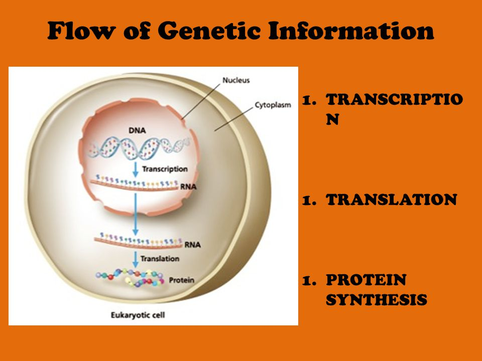 Chapter 10 Dna Rna Protein Synthesis Ppt Video Online Download