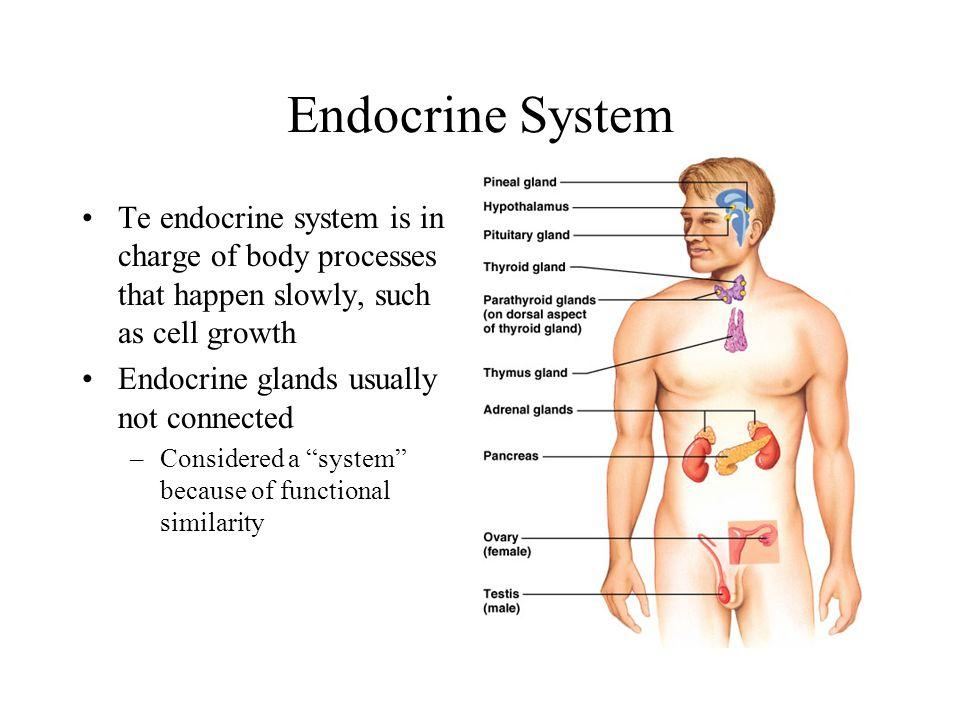 Endocrine System. - ppt video online download