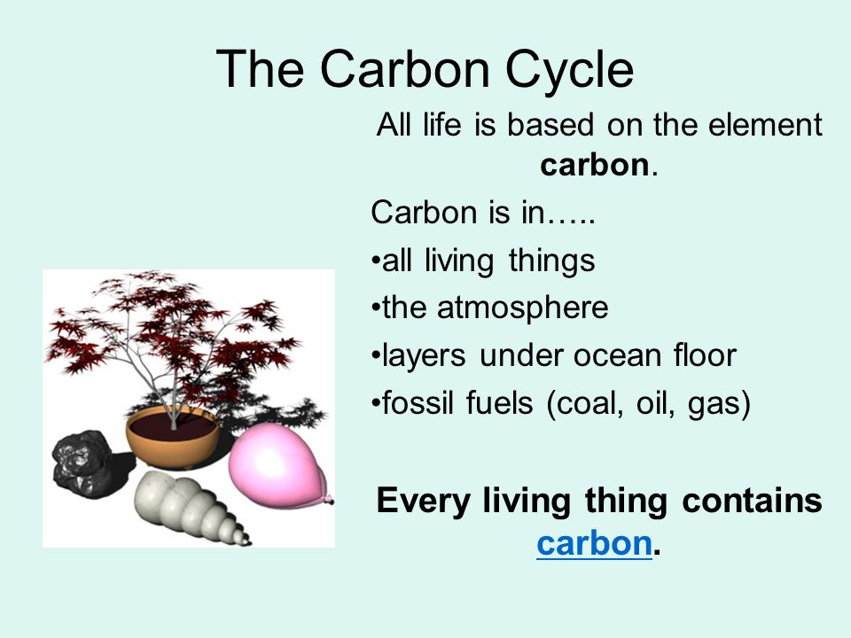 The Carbon Cycle Every living thing contains carbon.