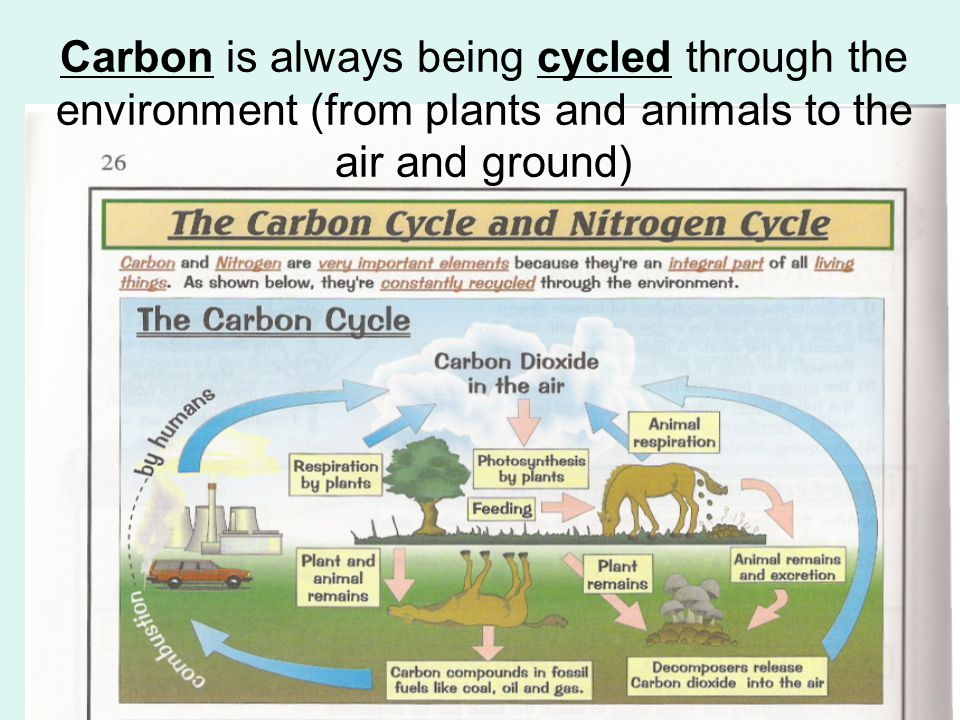Carbon is always being cycled through the environment (from plants and animals to the air and ground)