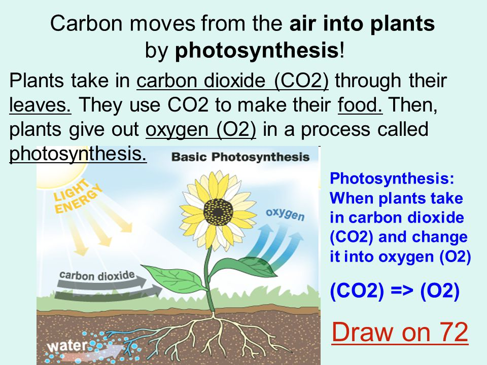 Carbon moves from the air into plants