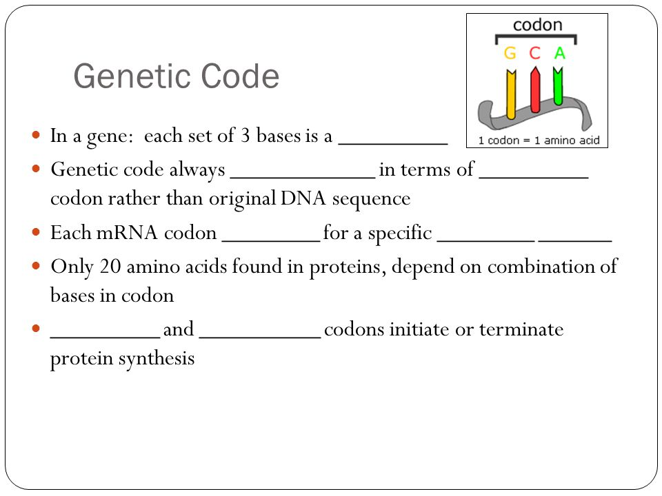 Genetic Code In a gene: each set of 3 bases is a _________