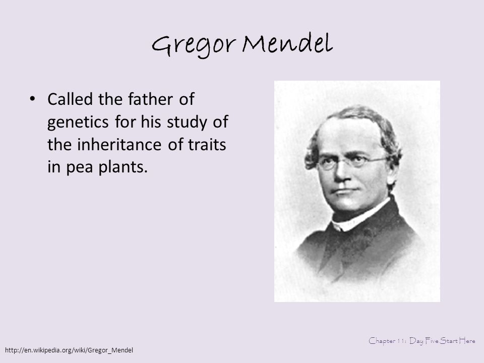why is mendel called the father of genetics