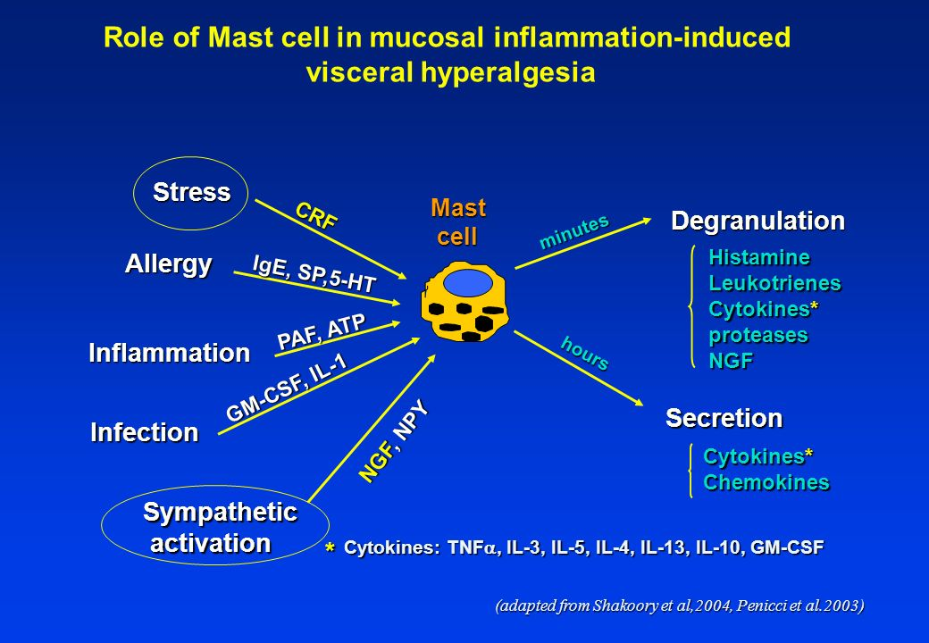 Role of Mast cell in mucosal inflammation-induced