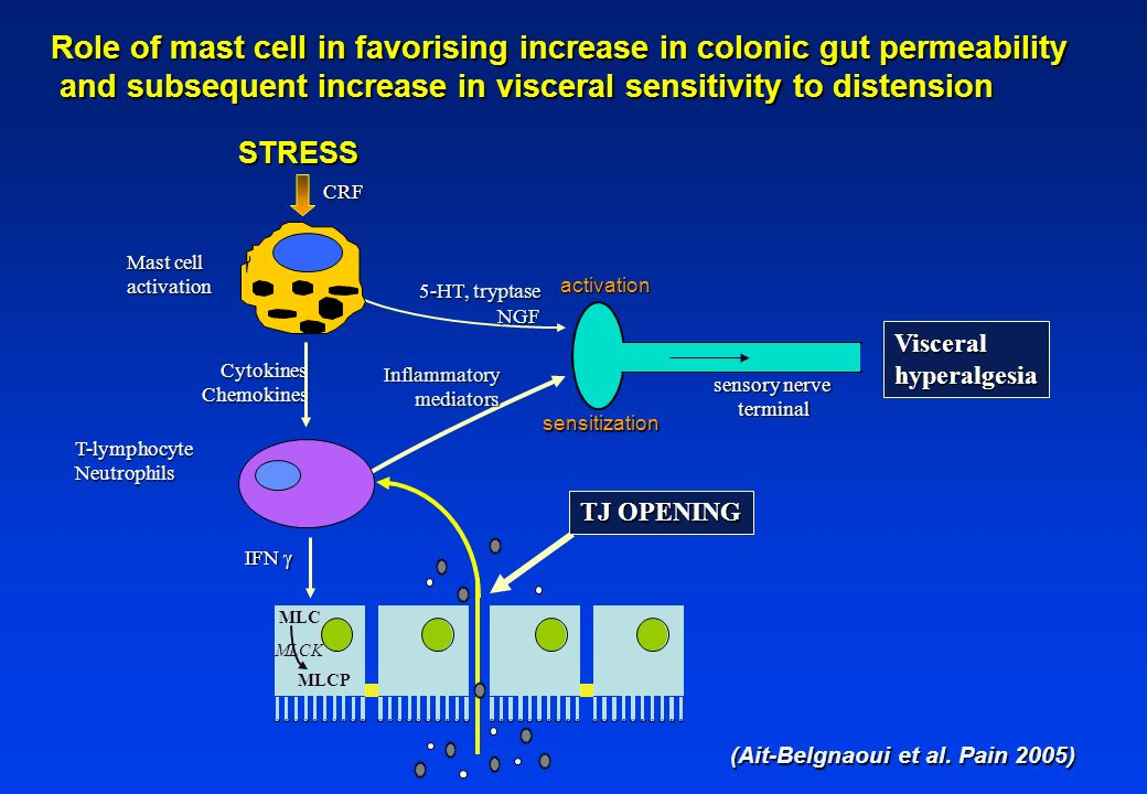 Role of mast cell in favorising increase in colonic gut permeability