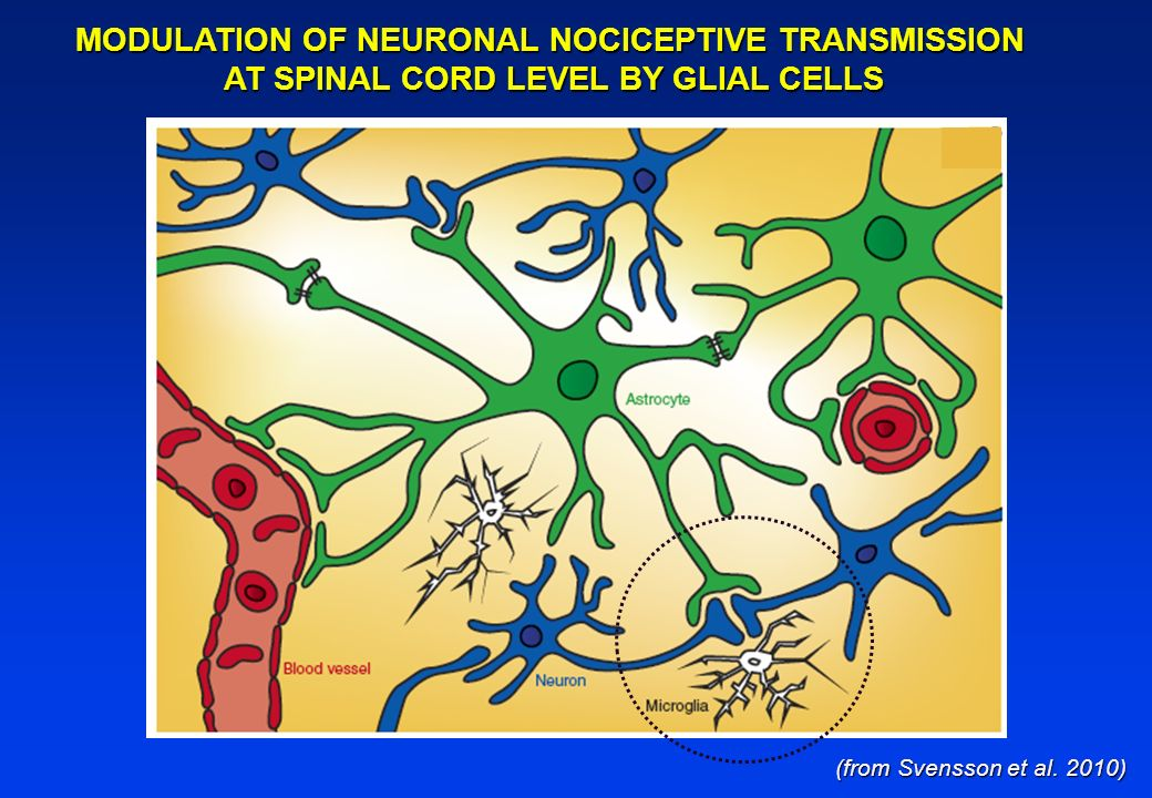 MODULATION OF NEURONAL NOCICEPTIVE TRANSMISSION