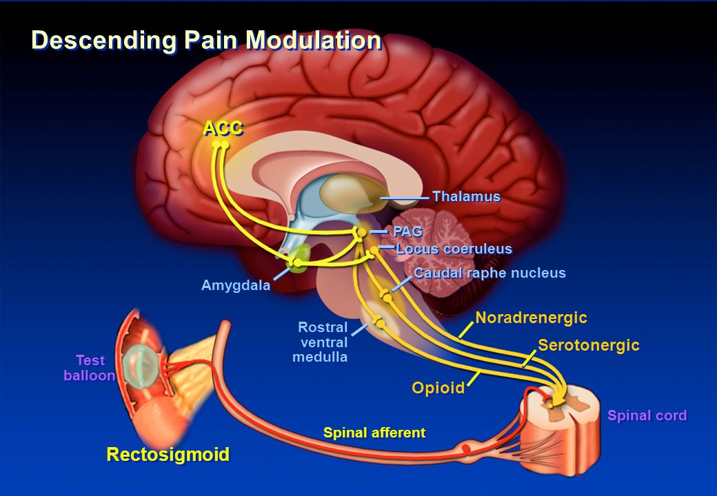 Descending Pain Modulation