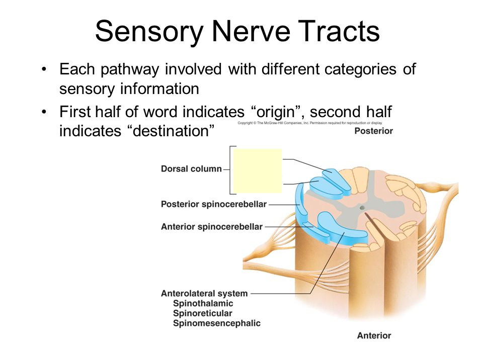 4222 258 introductory awareness of sensory loss The university exchange may be reached at 713-774 -7661  telephone inquiries may also be addressed to the following offices: president's office.