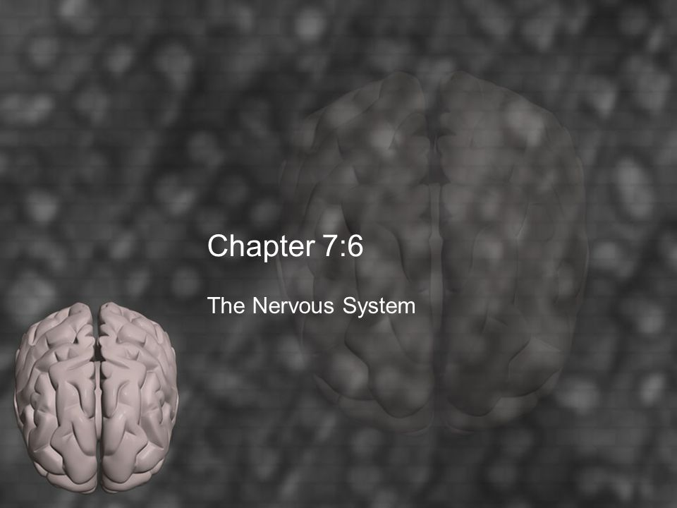 Chapter 7:6 The Nervous System