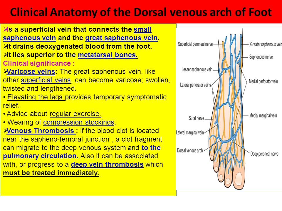 Clinical Anatomy Of The Foot Ppt Video Online Download