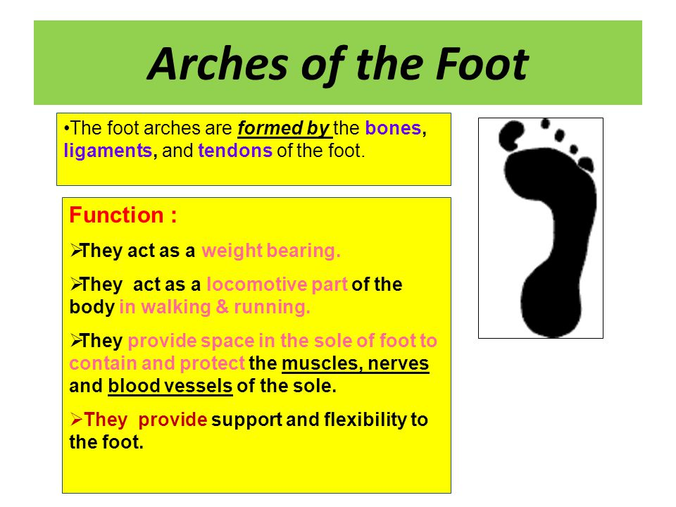 Clinical Anatomy of The Foot - ppt video online download